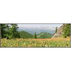 Цветущие горные луга Уч-Энмека
