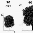 Как вырастить и посадить дуб?