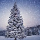 Народные приметы на декабрь (Студень)