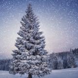 Народные приметы на погоду в декабре месяце (Студень)