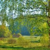 Народные приметы на погоду в мае (Травень)