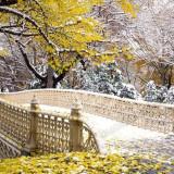 Народные приметы на погоду в ноябре месяце (Листопад)