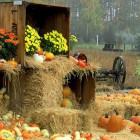 Народные приметы на сентябрь (Вересень)