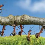 Тренировка в летний период «Дети Сварога»