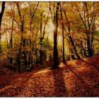 Там где осень...
