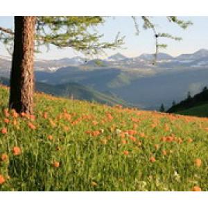 Цветущие горы. Уч-Энмек. Алтай