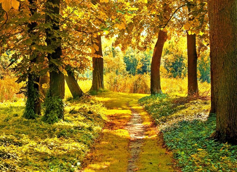 Жёлтая природа